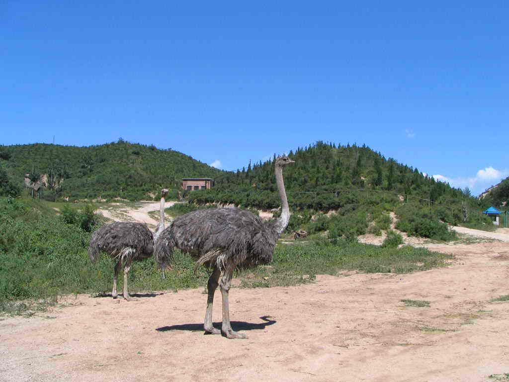 北京八达岭野生动物世界是亚洲最大的山地野生动物园