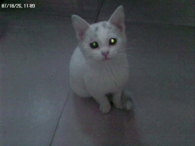 赠送乖巧可爱的小白猫