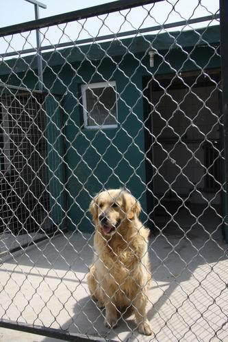 纳兰犬舍宠物寄养服务代办犬证_回龙观网上交